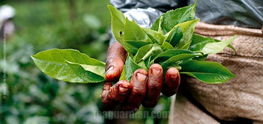 Is Fair Trade fair at all?