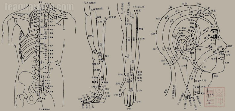 Accupunctural points in TCM