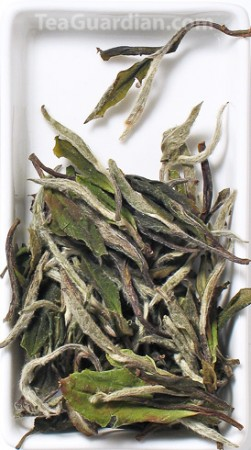 White Peony, white tea, special grade, matured for 1 year