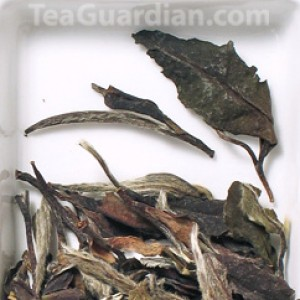White Peony, white tea, matured for 8 years