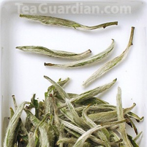 Silver Needle, but green tea version