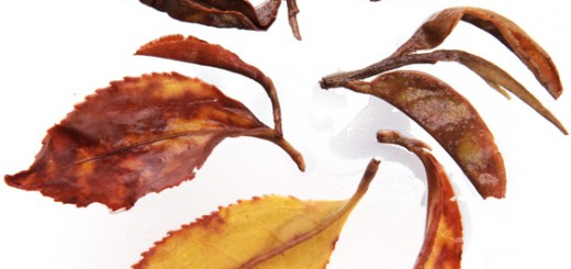 Infused leaves: Nepal Handrolled Traditional Black Tea