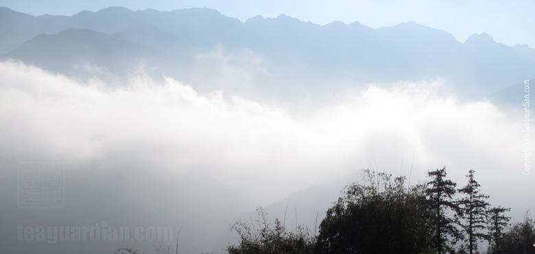 Yunwu Cloud Amp Mist Green Tea Tea Guardian
