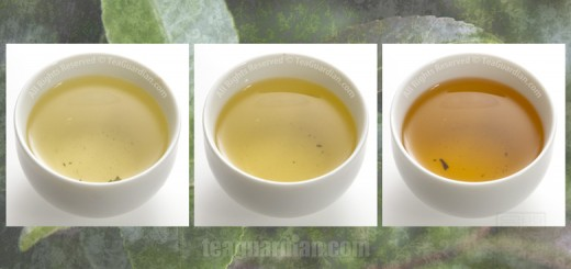 Comparing the infusion colour of Gongfu Green Uva, a Paochong oo