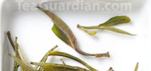 Huangshan Maofeng, green tea