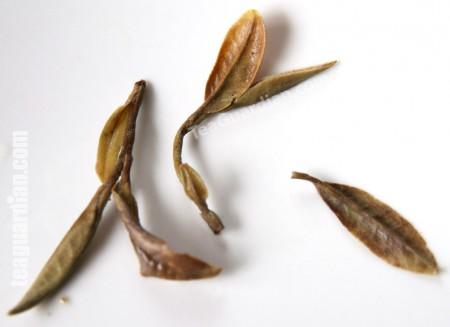 infused leaves of white peony (bai mudan)