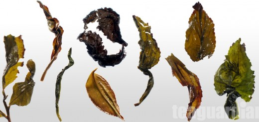 The infused leaves of a few different oolongs