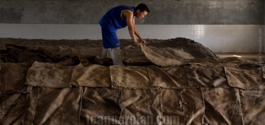 Worker covering a pile of tealeaves for undergoing post-fermenta