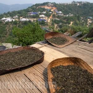 Sun-drying tea in Yunnan for maocha production