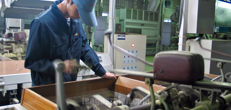 Workman checking evenness of twist-forming of the steamed tealea