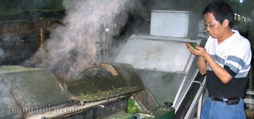 Green tea production: steaming
