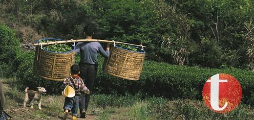 Tea Guardian default image for site thunbnails