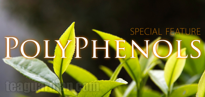 Tea Polyphenols Special Feature Title
