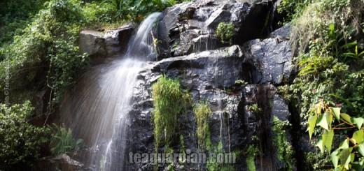 Spring water vs tap water