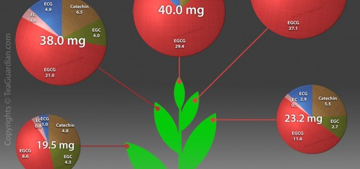 Catechins composition of fresh tea leaves by pluck position