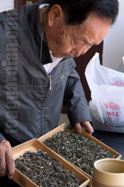 Master Zou Bing Liang inspecting two batches of maocha for blend