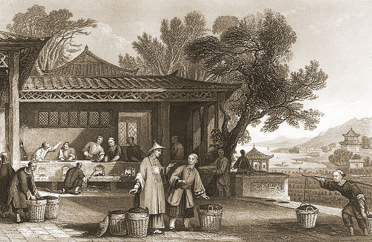 Tea Cultivation and Preparation