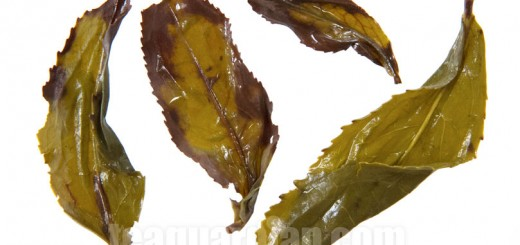 Infused leaves of Wuyi Meizhan
